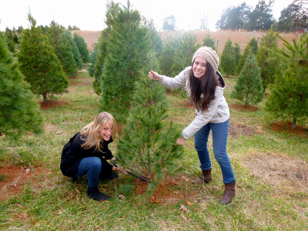 Picking out a Christmas Tree at Valley Star Farm