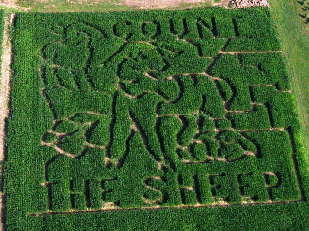 Count the Sheep Garden Maze