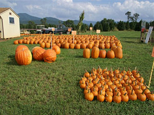 Plenty of pumpkins for sale at Valley Star Farm
